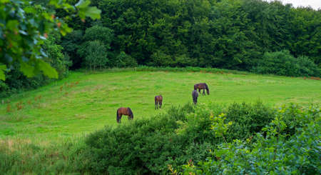 yegua: Una foto de los caballos en el entorno natural