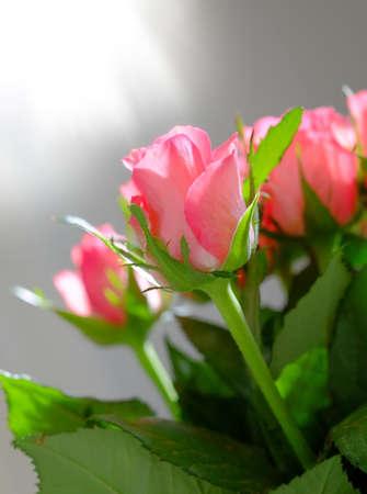 Een foto van rode rozen en zonlicht
