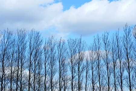 A photo of trees in wintertime photo