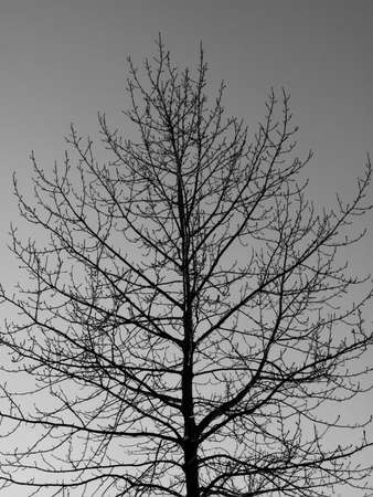 tree outline: A photo of  trees in wintertime