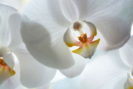 A photo of Beautiful Orchids photo