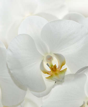 A photo of Beautiful white Orchids photo