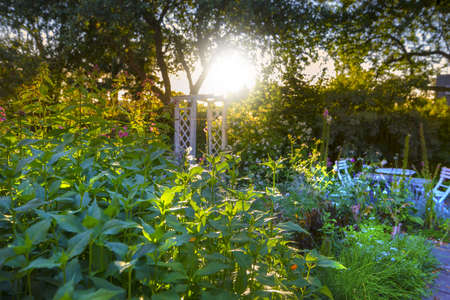 vacation home: A photo of lush garden in summertime