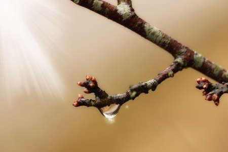 A photo a spring bud