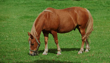 A photo of a horse on a green field photo
