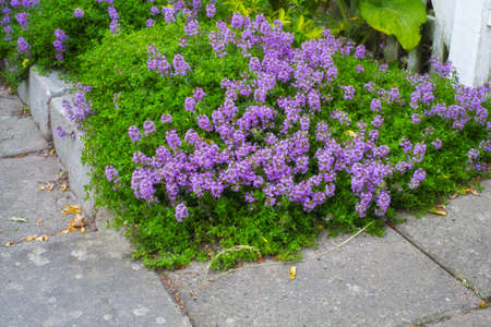 tuberous: A photo of a flowerbed in garden Stock Photo