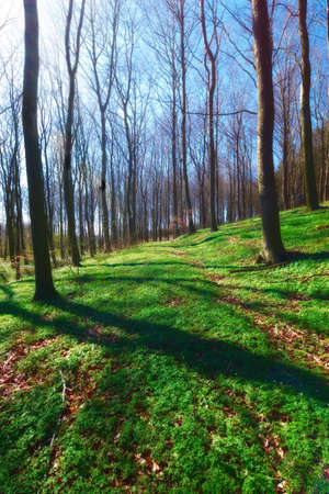 A photo of the forest in springtime photo