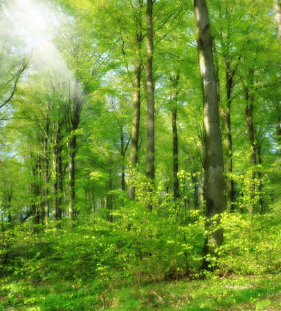 A photo of Sunshine in the green forest Stock Photo - 15299279