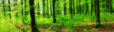 A photo of Sunshine in the green forest Stock Photo - 15298251