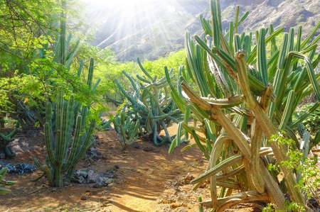 A photo of cactus wilderness in USA Stock Photo