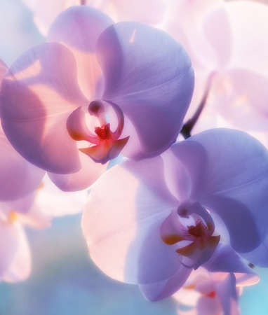 purple orchid: A photo of Beautiful Orchids