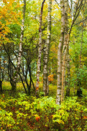 An image of the forest in autumn photo