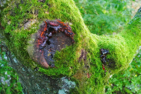 forest conservation: A photo of green moss on a tree