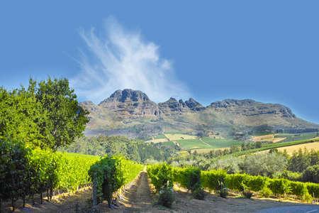 A photo of wine fields - Shot near Stellenbosch, Western Cape, South Africa.