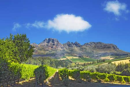 Ein Foto von Weinfeldern - in der Nähe von Stellenbosch Schuss, Western Cape, Südafrika.