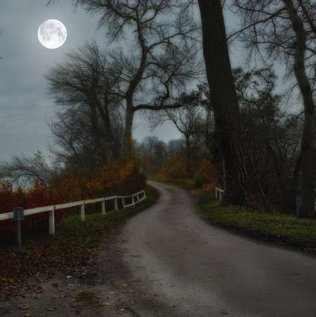 A photo of Moon shine - landscape, road and forest