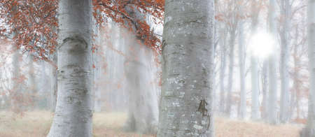 A photo of morning fog in the forest in autumn photo