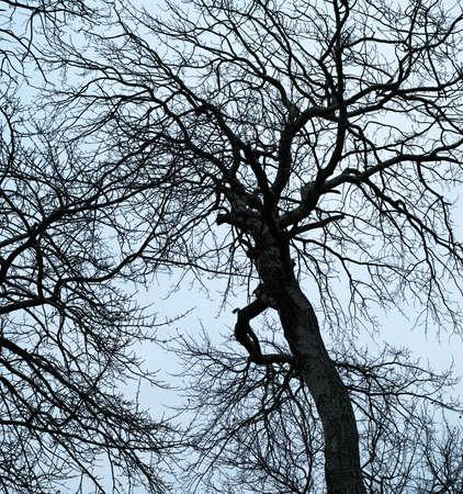 depressive: A photo of black tree silhouette