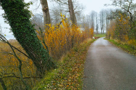 A photo of Road in autumn landscape Stock Photo - 17295119