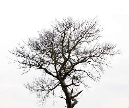 black and white plant: A photo of black tree silhouette