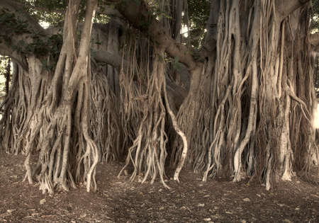 A photo of a tropical tree in Waikiki, Honolulu, Hawaii Stock Photo - 17293754