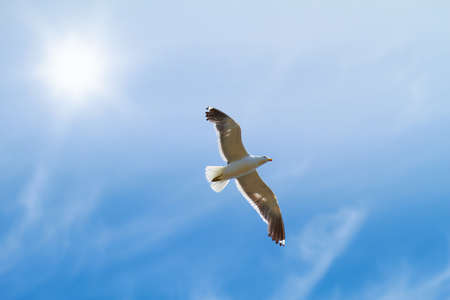 wingspread: A photo of seagulls
