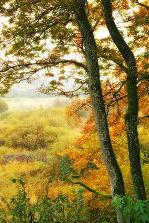 Ein Foto des Waldes in den Farben des Herbstes Standard-Bild