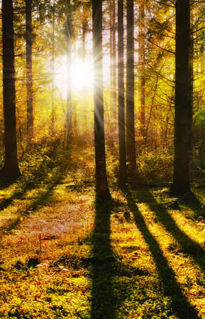 A photo of the forest in the colors of autumn Stock Photo - 17294931