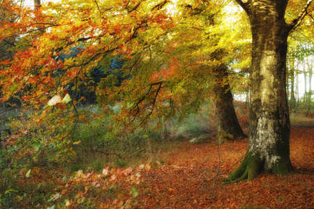 A photo of the forest in the colors of autumn photo
