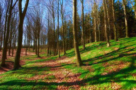 undergrowth: A photo of early spring forest