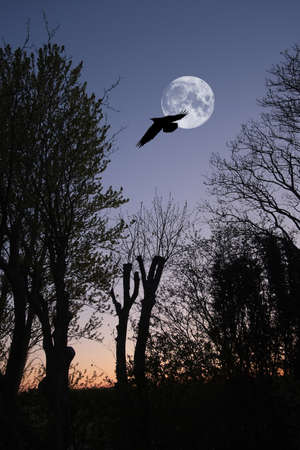 scarry: A photo of the full moon and bird in winter landscape in wintertime