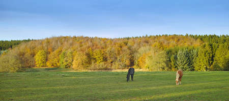 A photo of horses on a field - autumn Stock Photo - 17293931