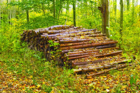 sawed: A photo of A  pile of wood