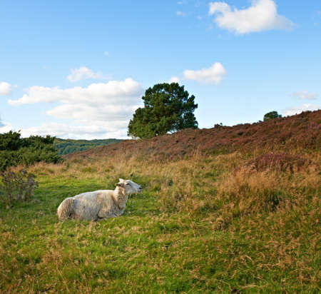 a photo of sleepy sheep in autumn landscape photo