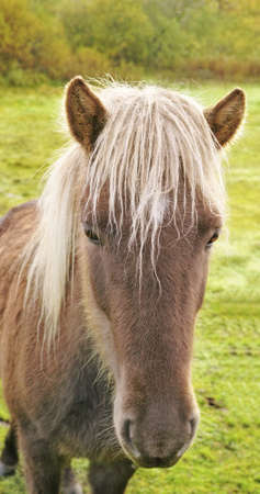 a photo of a horse in natural setting Stock Photo - 17328060