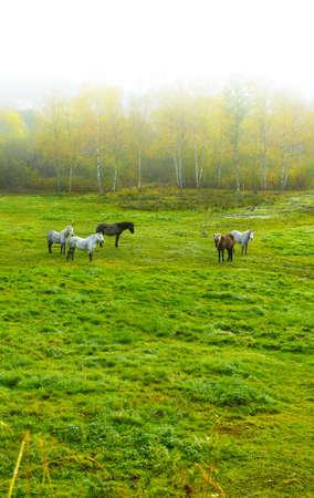 rancho: una foto de un caballo en el entorno natural