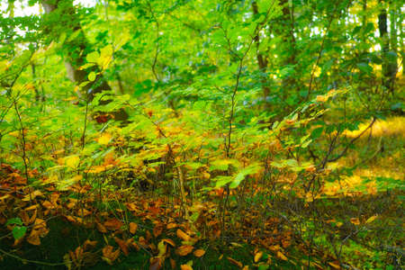 saturate: a photo of  autumn colors Stock Photo