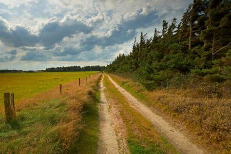 grassy field: Autumn landscape in Denmark