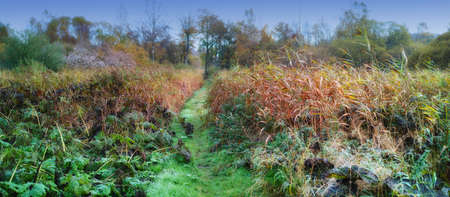 A photo of wet swampland Stock Photo - 17331174