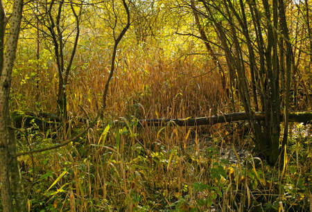 A photo of wet swampland Stock Photo - 17328728
