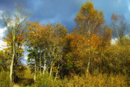 A photo of wet swampland Stock Photo - 17331319