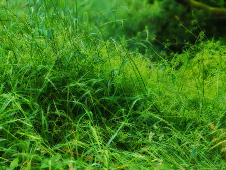 swampland: A photo of wet swampland Stock Photo