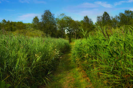 A photo of wet swampland Stock Photo - 17328297