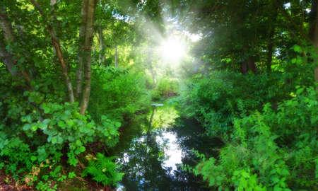 contaminacion ambiental: Una foto de mojado pantano