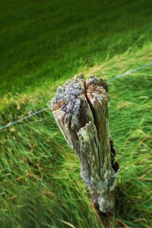 pasture fence: a photo an old fence post