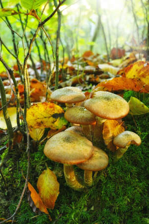 a photo Forest mushrooms in the grass