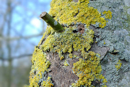A photo of bark - useful as background Stock Photo - 17328541