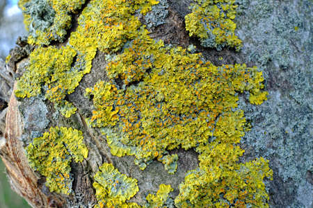 A photo of bark - useful as background Stock Photo - 17328735