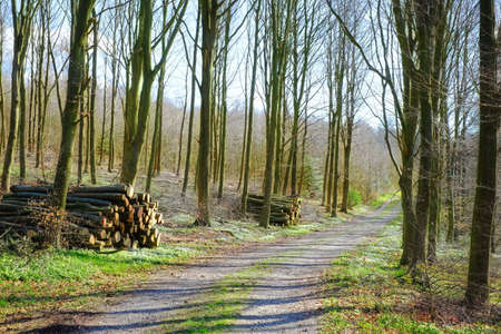 A photo of a forest road Stock Photo - 17328308