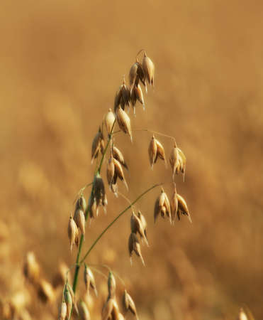 A telephoto of a wheat field photo